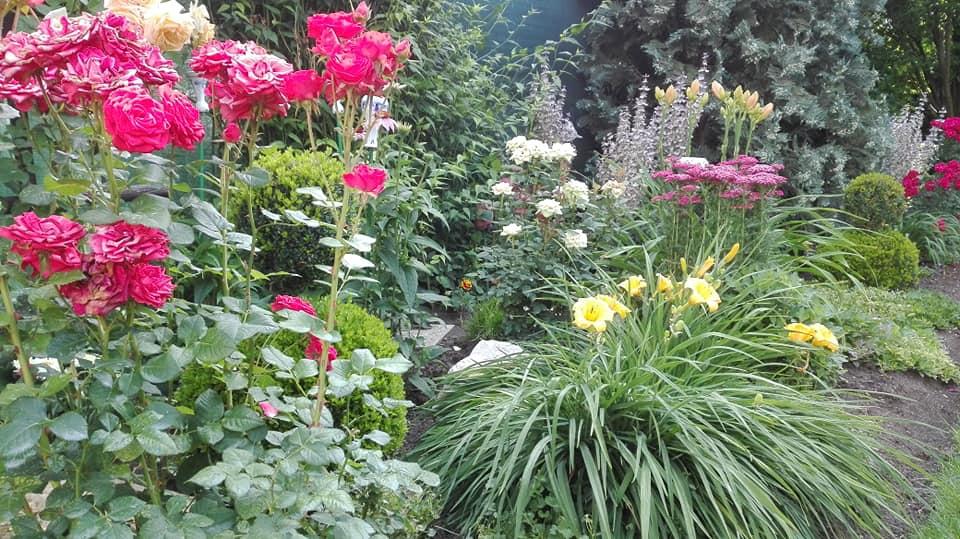 Zahrada - Obrázok č. 124
