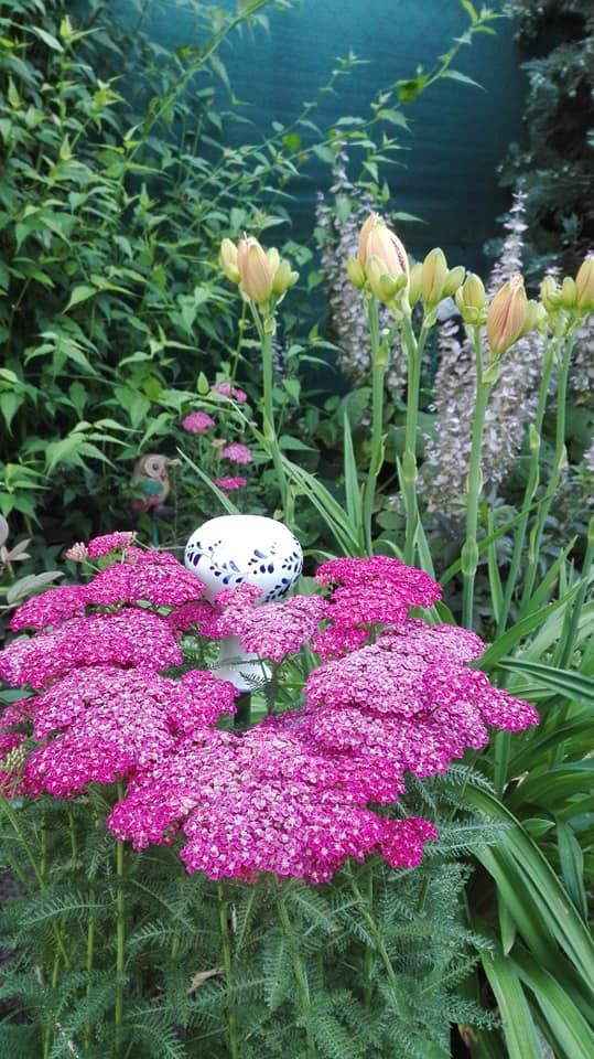 Zahrada - Obrázok č. 123