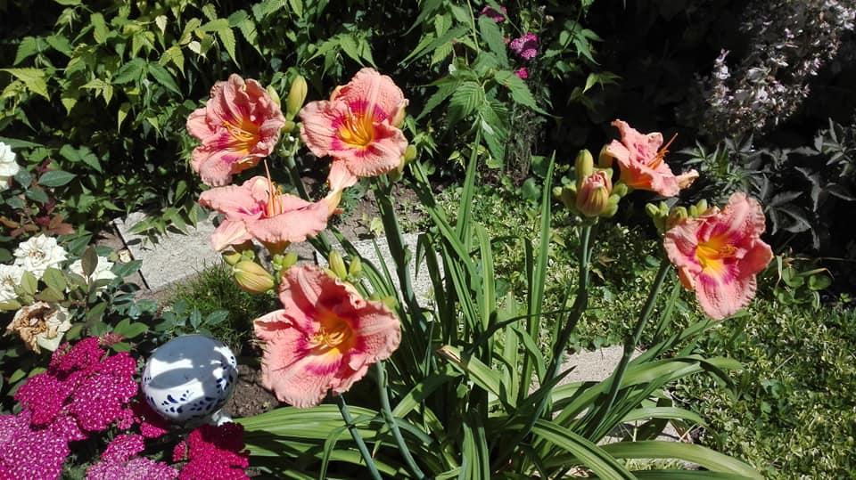 Zahrada - Obrázok č. 125
