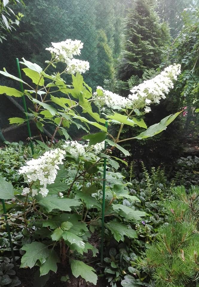 Zahrada - Obrázok č. 126