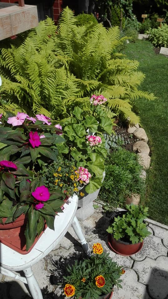 Zahrada - Obrázok č. 132