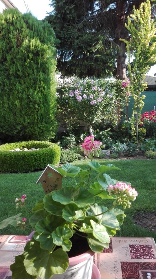 Zahrada - Obrázok č. 134