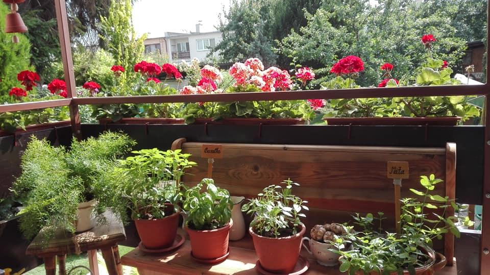 Zahrada - Obrázok č. 135