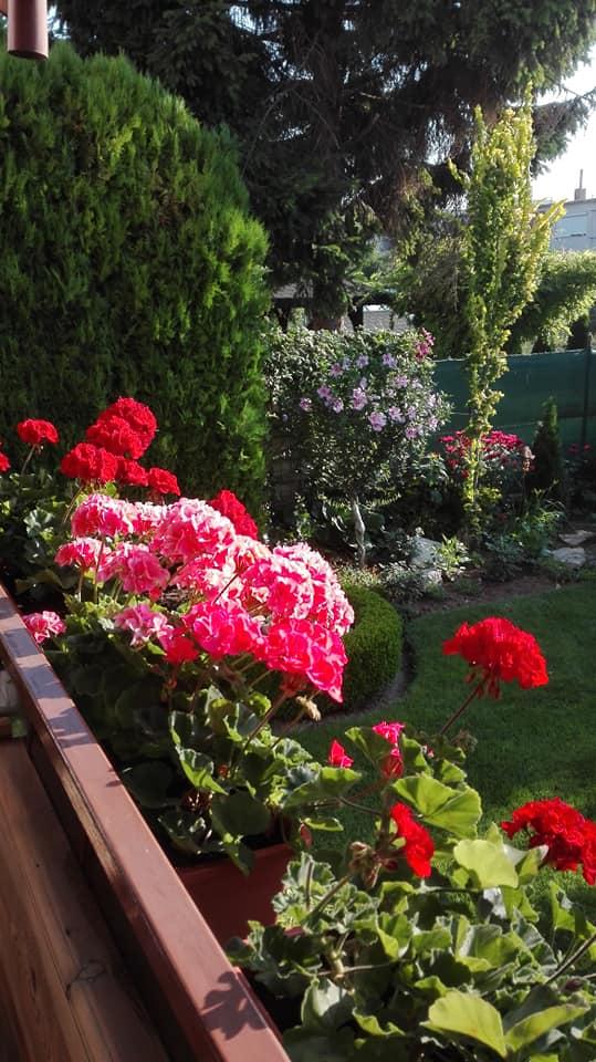 Zahrada - Obrázok č. 136