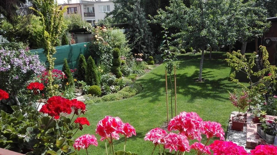 Zahrada - Obrázok č. 137