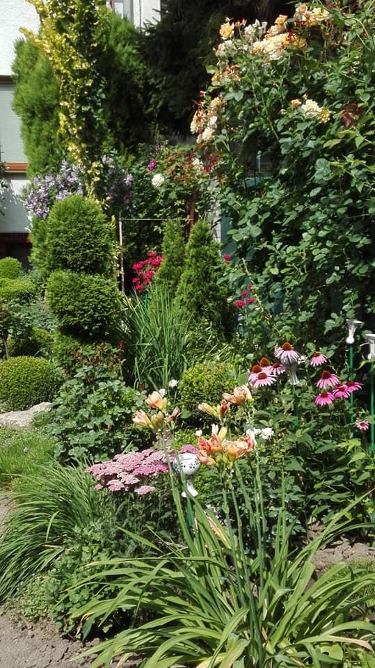 Zahrada - Obrázok č. 138