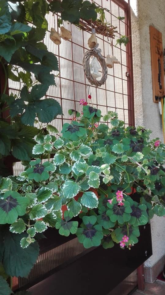 Zahrada - Obrázok č. 131