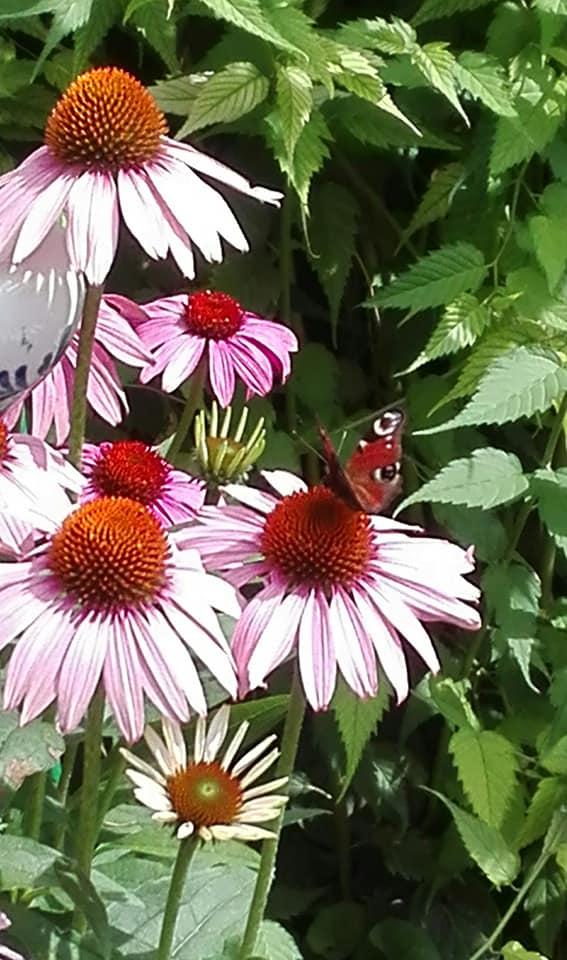 Zahrada - Obrázok č. 139