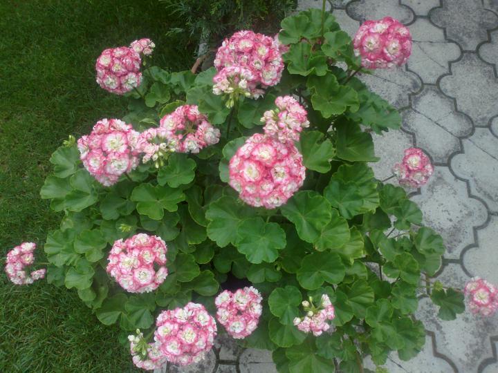 Zahrada - Obrázok č. 143