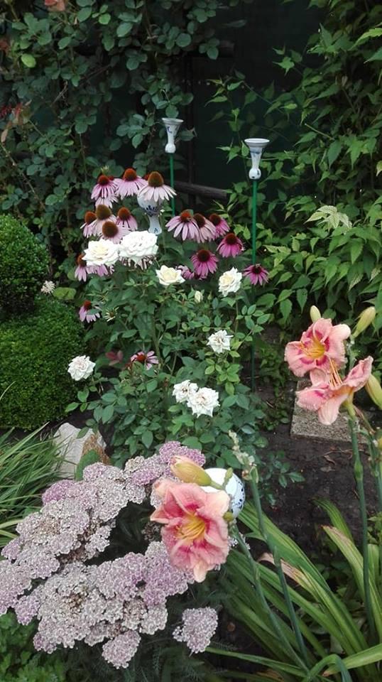 Zahrada - Obrázok č. 145