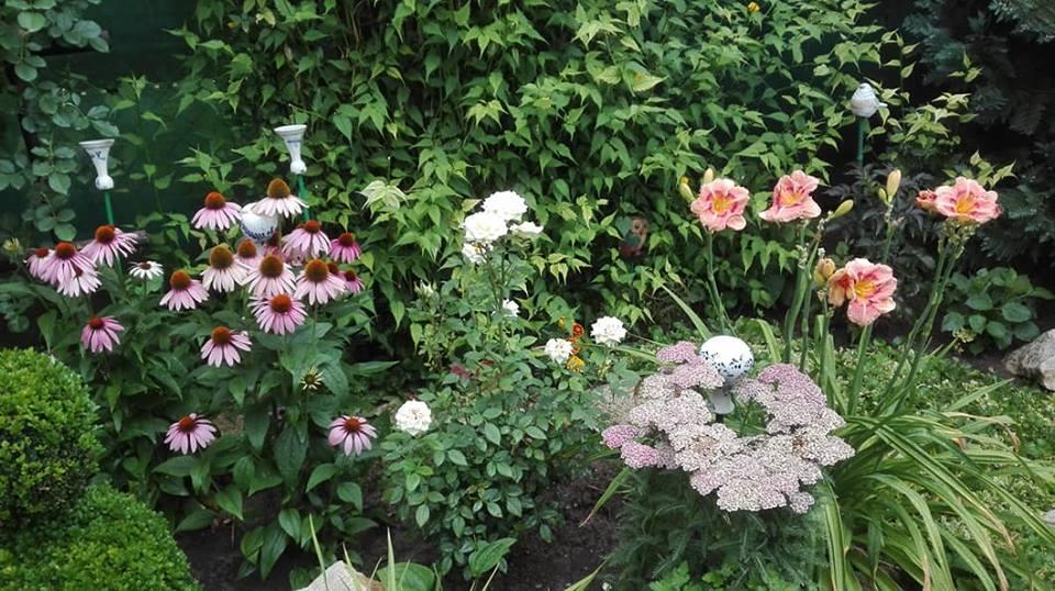 Zahrada - Obrázok č. 146
