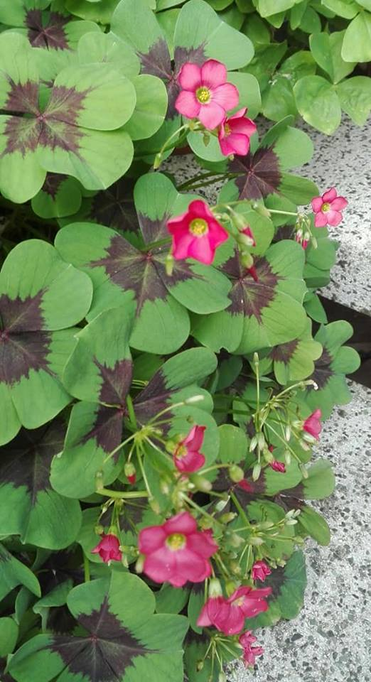Zahrada - Obrázok č. 148