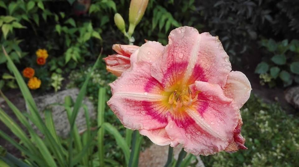 Zahrada - Obrázok č. 149