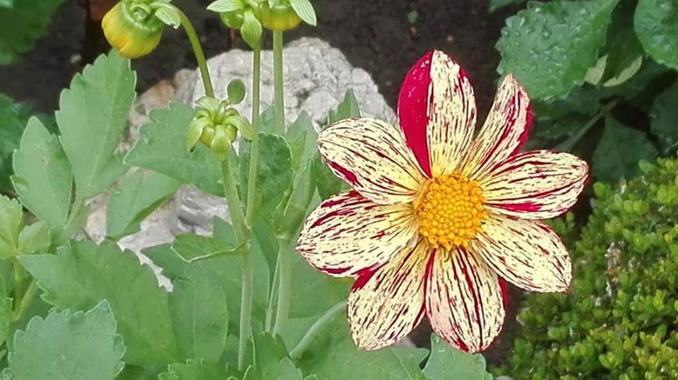 Zahrada - Obrázok č. 150