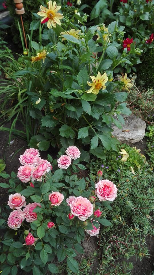 Zahrada - Obrázok č. 152