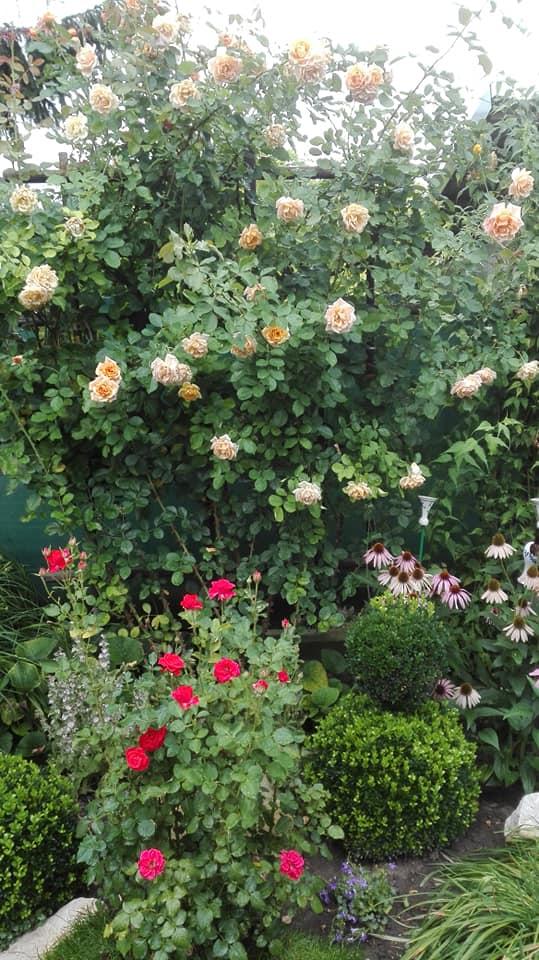 Zahrada - Obrázok č. 153