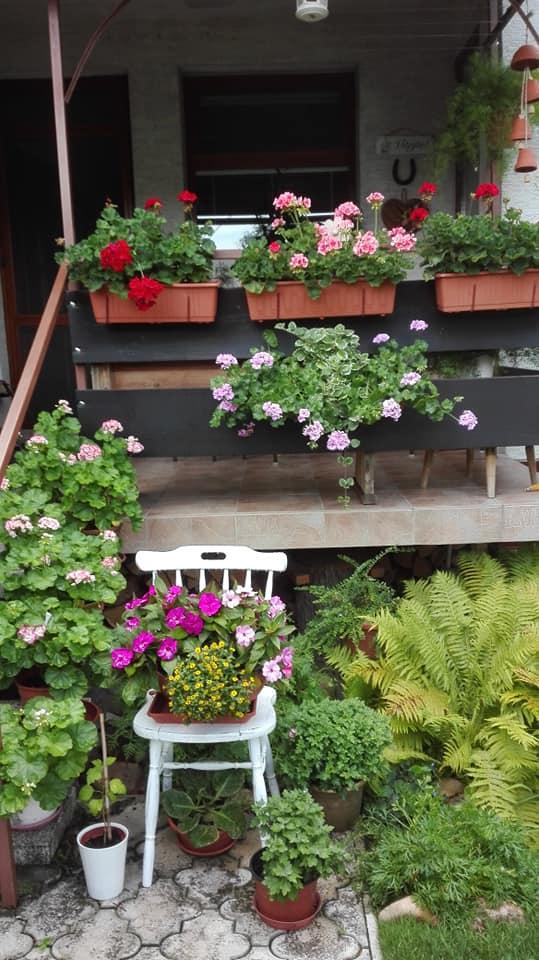 Zahrada - Obrázok č. 154