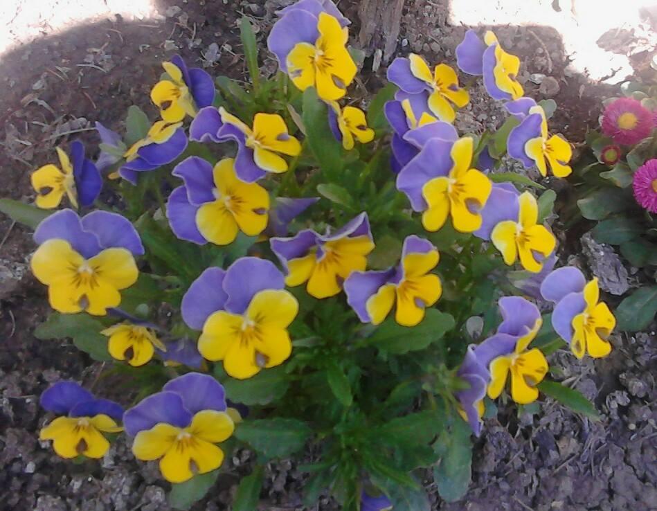 Zahrada - Obrázok č. 165