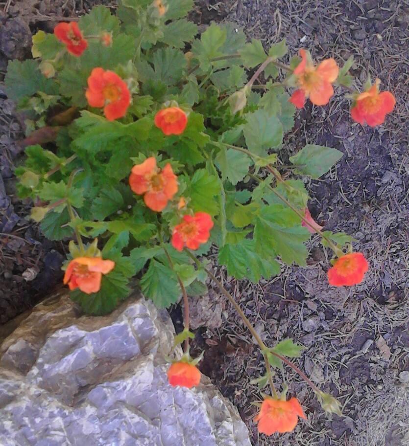 Zahrada - Obrázok č. 166
