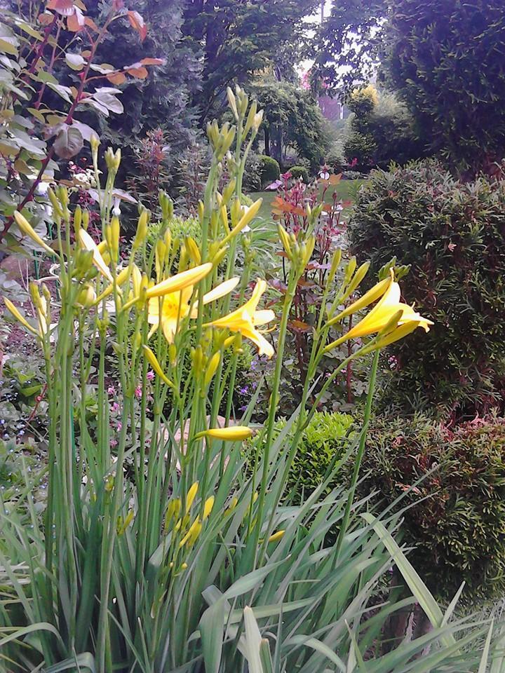 Zahrada - Obrázok č. 170