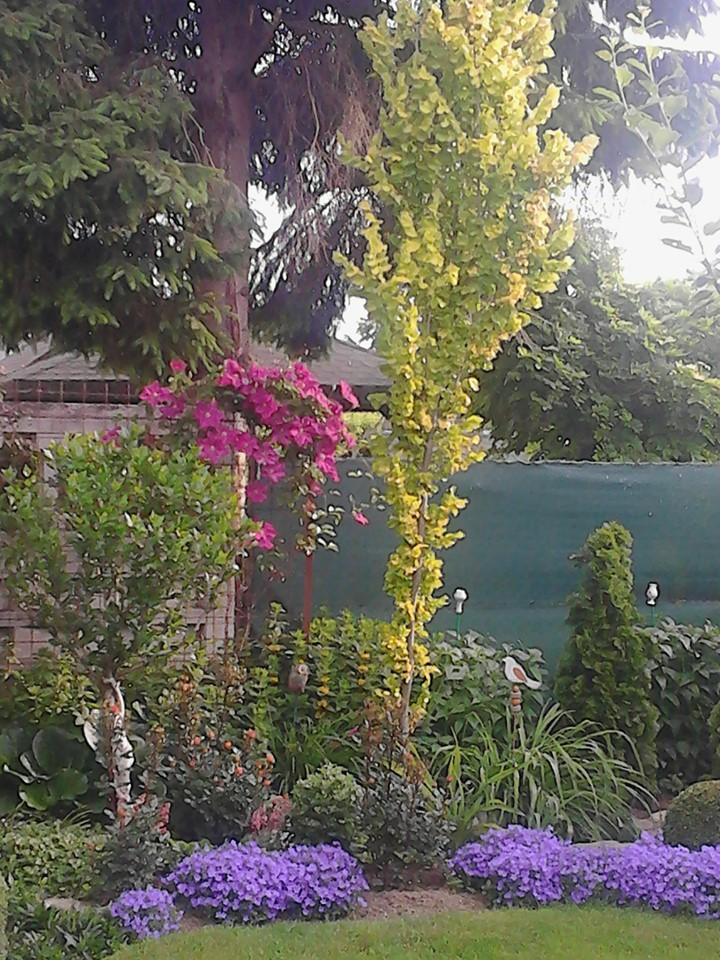 Zahrada - Obrázok č. 176