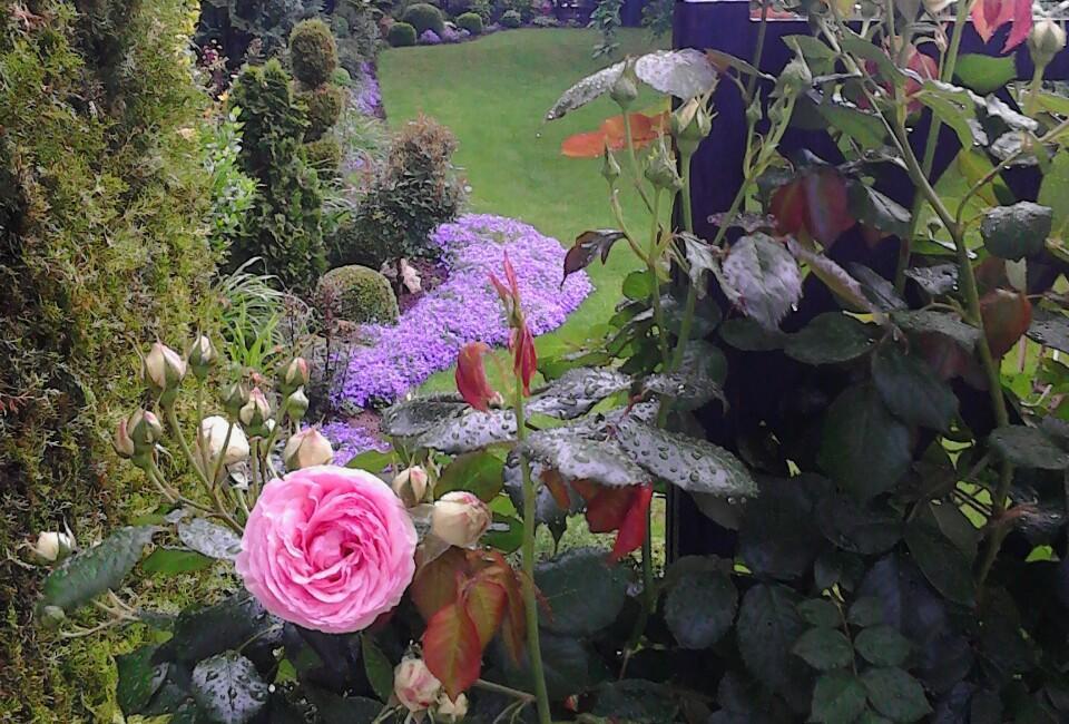 Zahrada - Obrázok č. 178