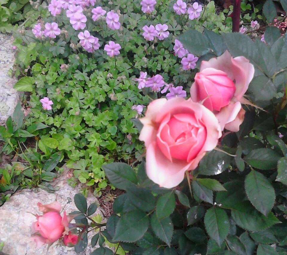 Zahrada - Obrázok č. 179
