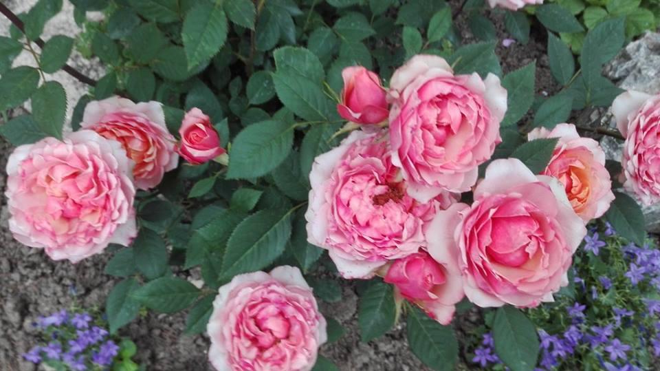 Zahrada - Obrázok č. 180
