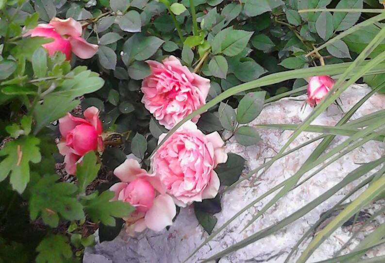 Zahrada - Obrázok č. 181