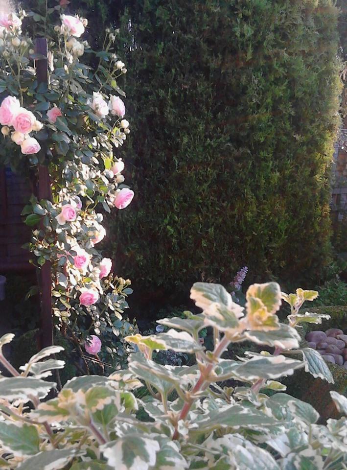 Zahrada - Obrázok č. 182