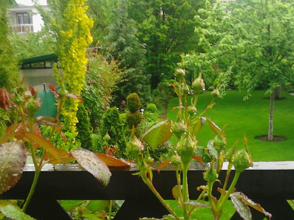 Zahrada - Obrázok č. 183