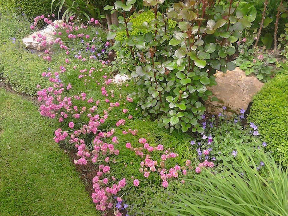 Zahrada - Obrázok č. 184