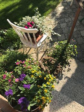 Zahrada - Obrázok č. 186
