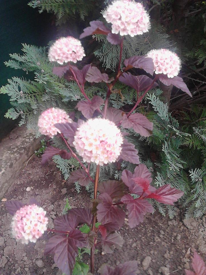 Zahrada - Obrázok č. 188