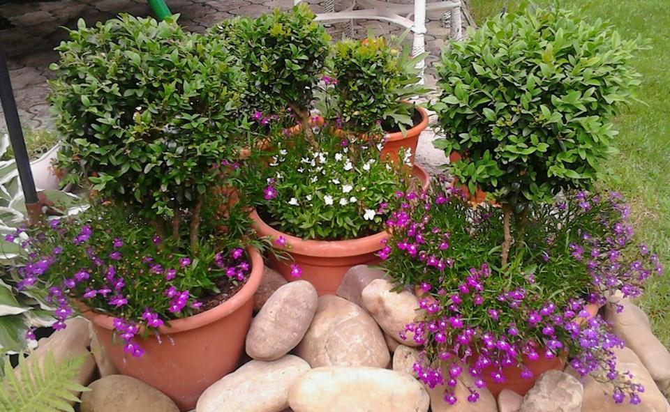 Zahrada - Obrázok č. 192
