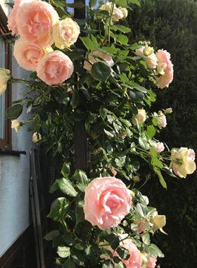 Zahrada - Obrázok č. 196