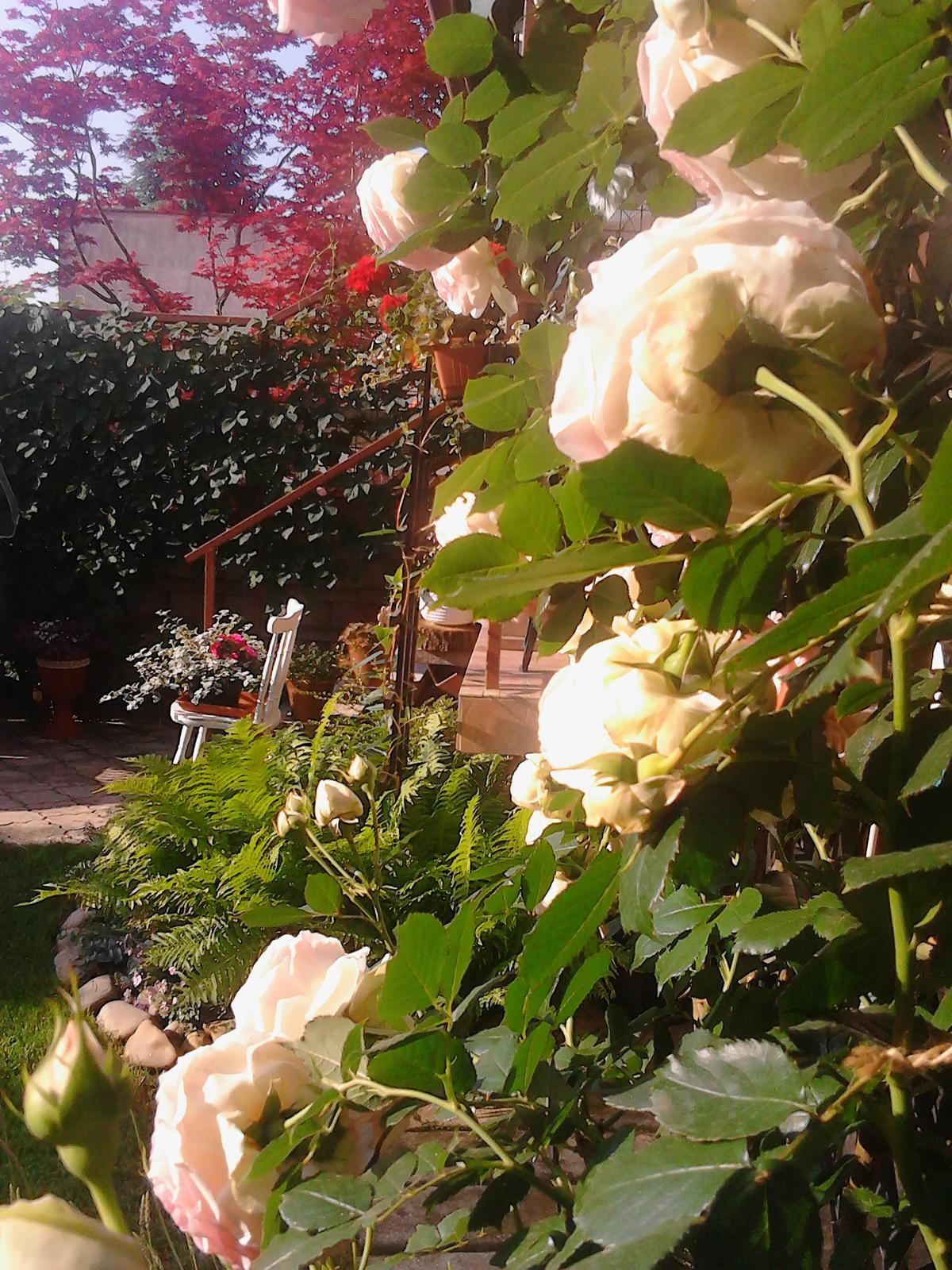Zahrada - Obrázok č. 197