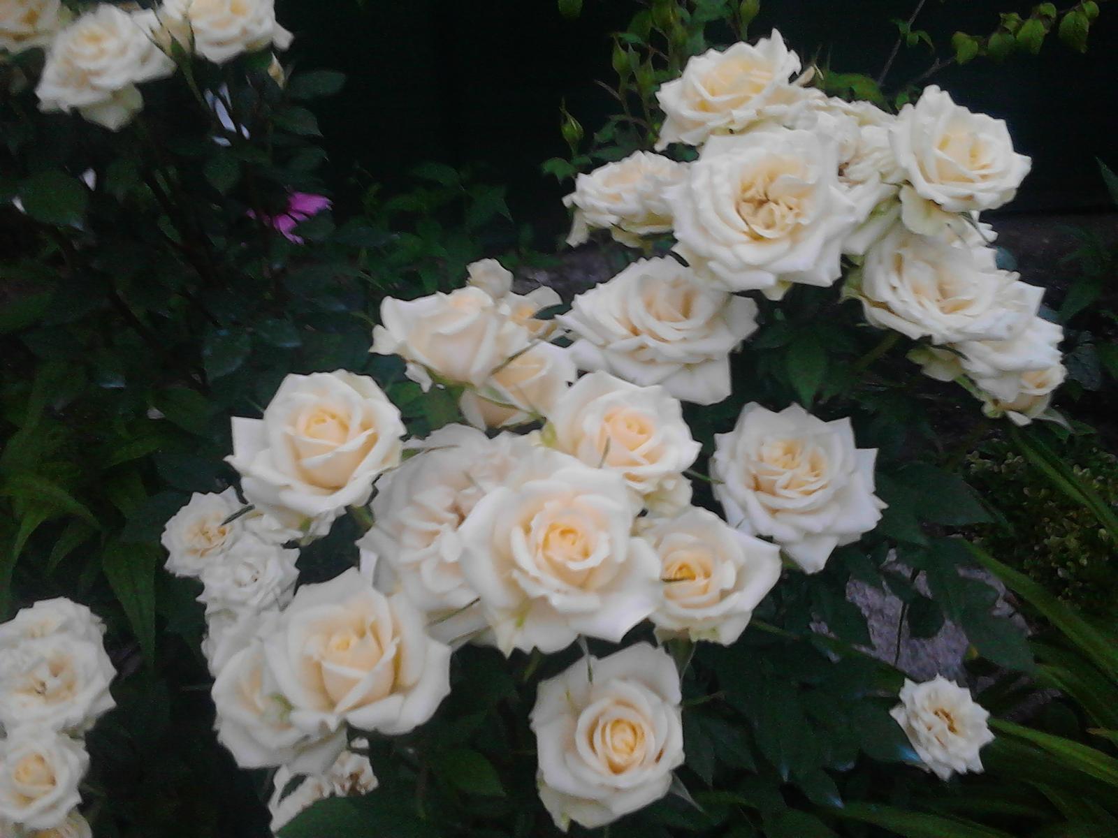 Zahrada - Obrázok č. 200