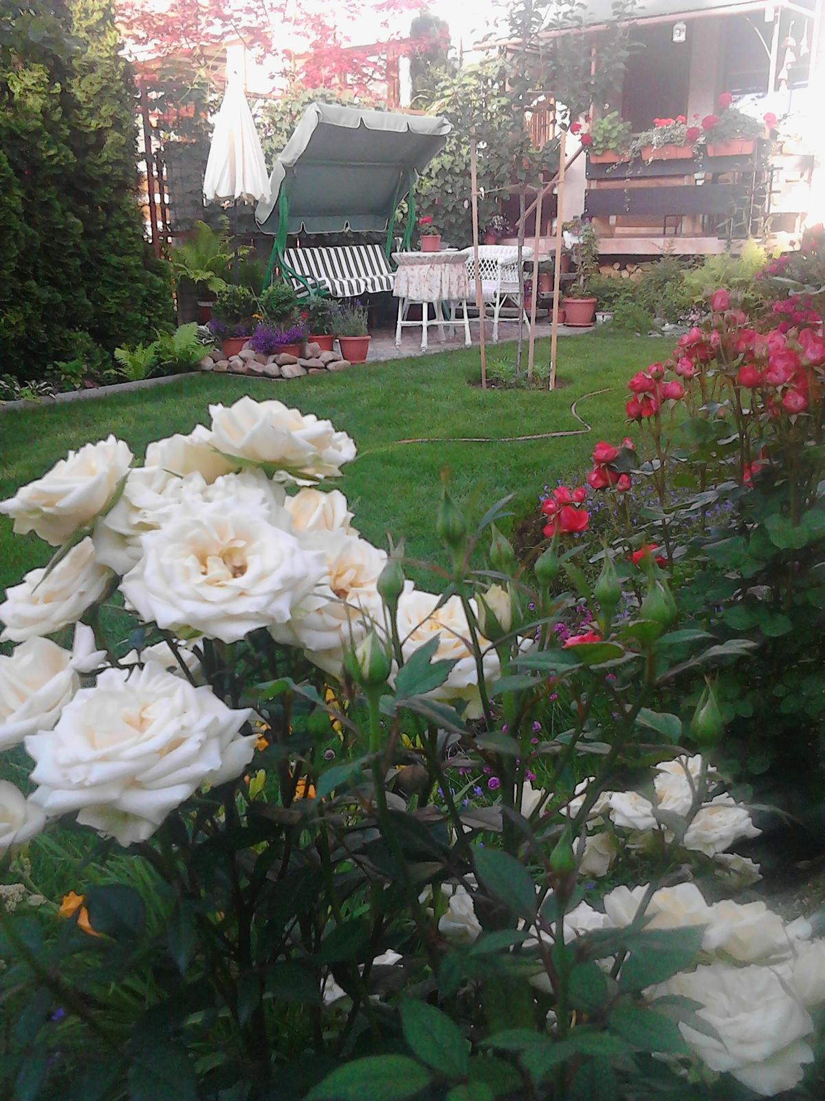 Zahrada - Obrázok č. 201