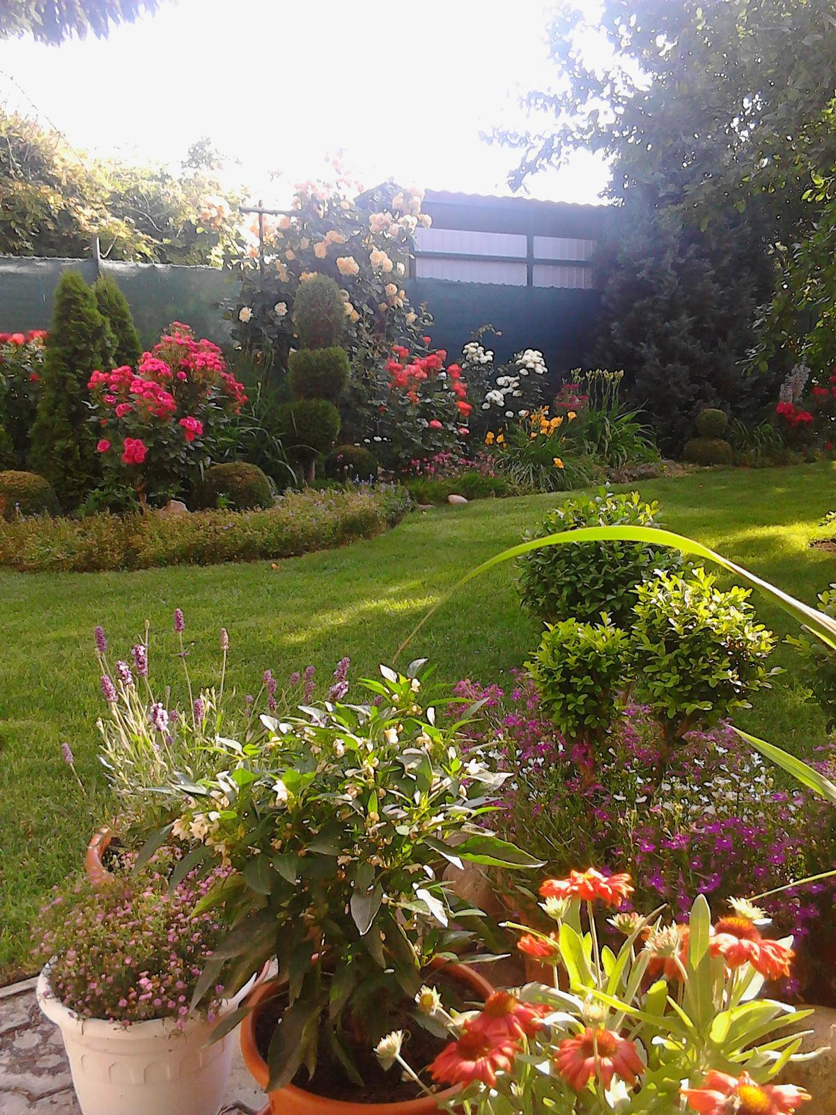 Zahrada - Obrázok č. 227