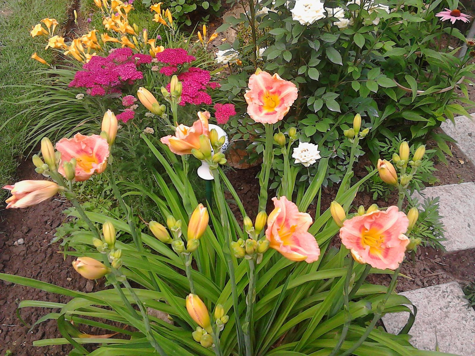 Zahrada - Obrázok č. 238