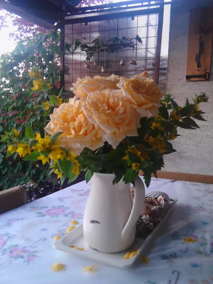 Moje male radosti - Ruze z nasej zahrady