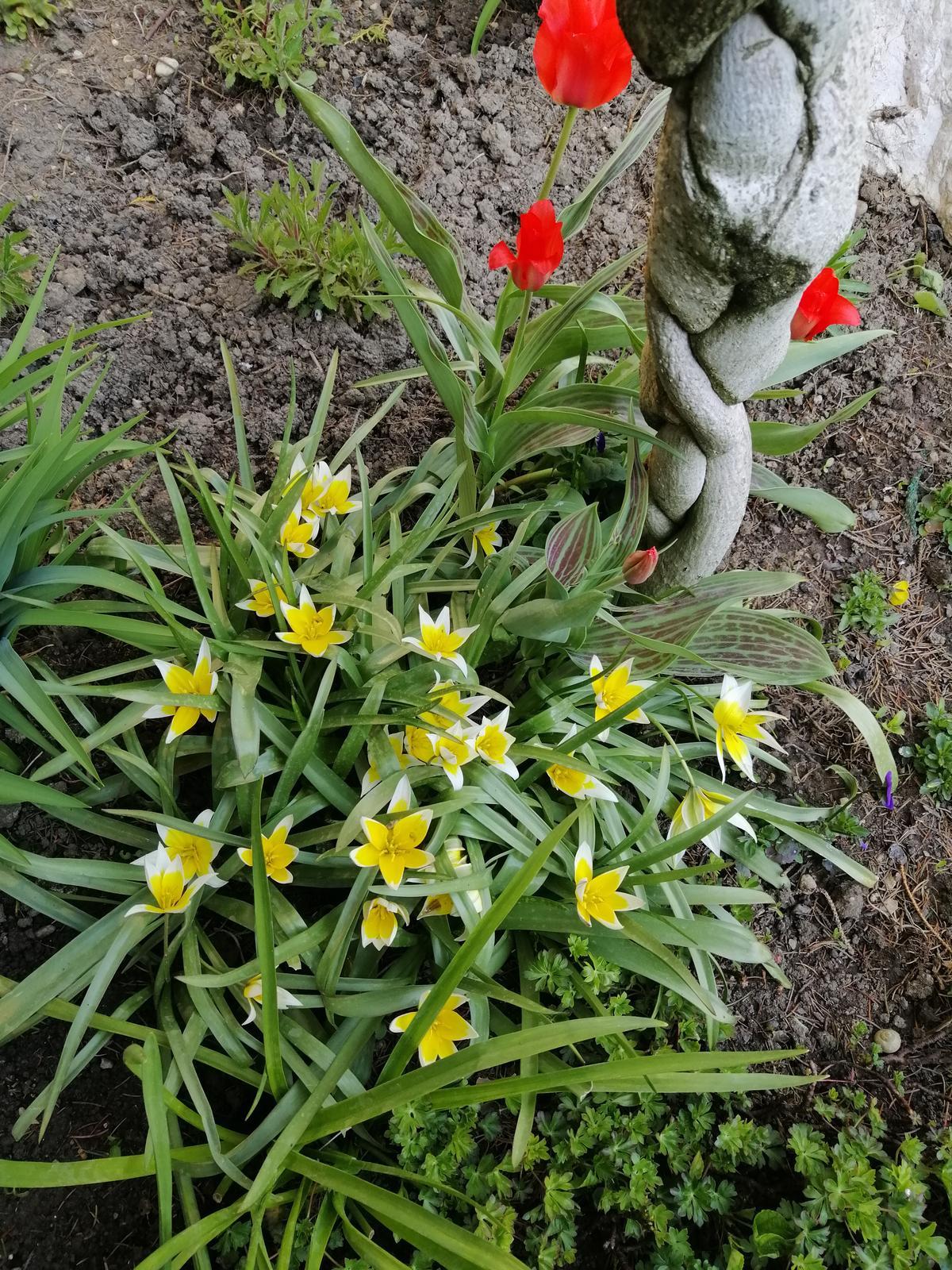 Zahrada - Obrázok č. 370