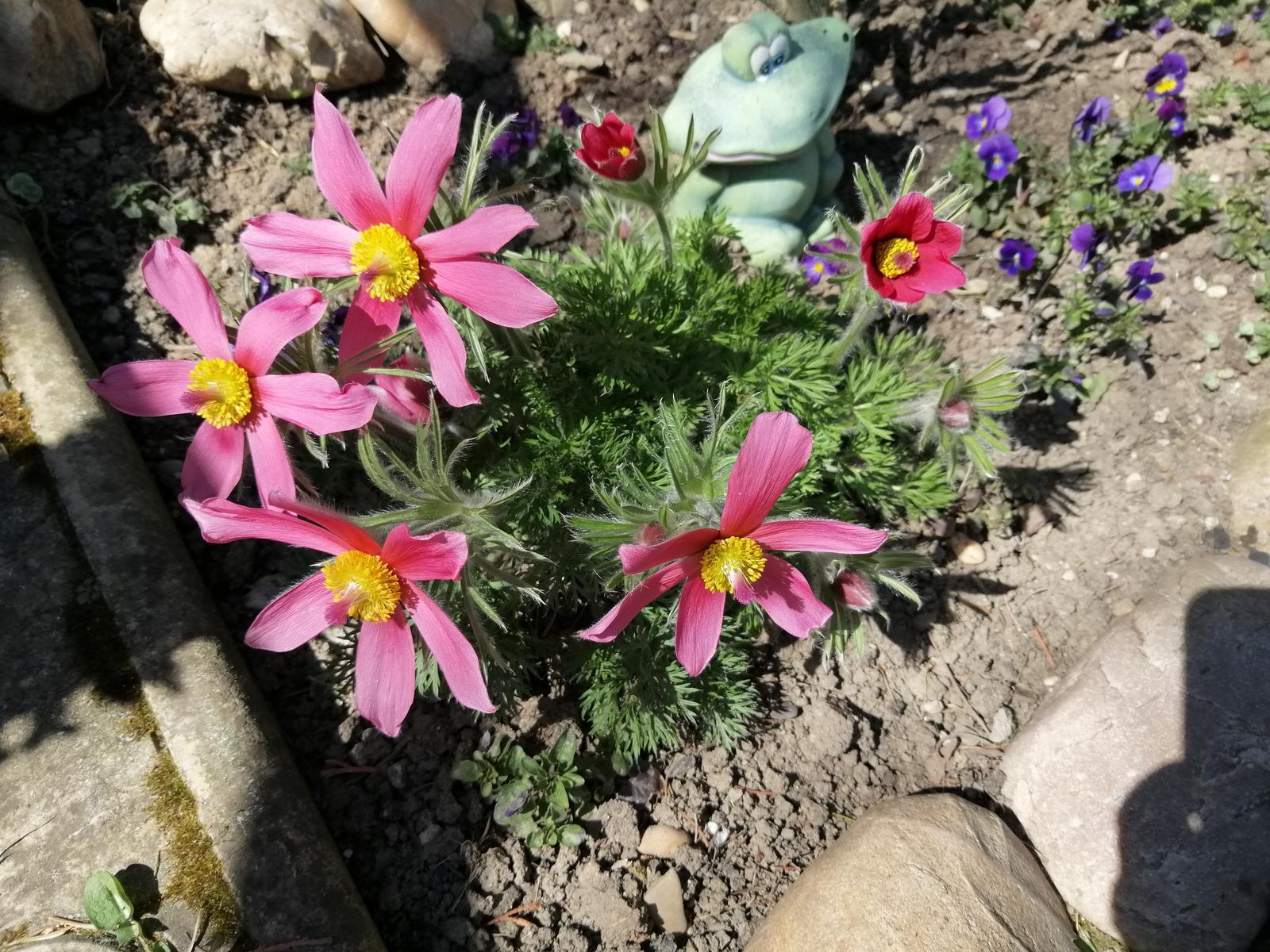 Zahrada - Obrázok č. 372