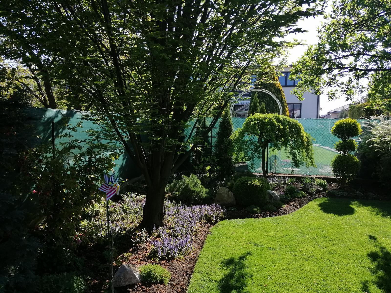 Zahrada 2020 - Obrázok č. 1