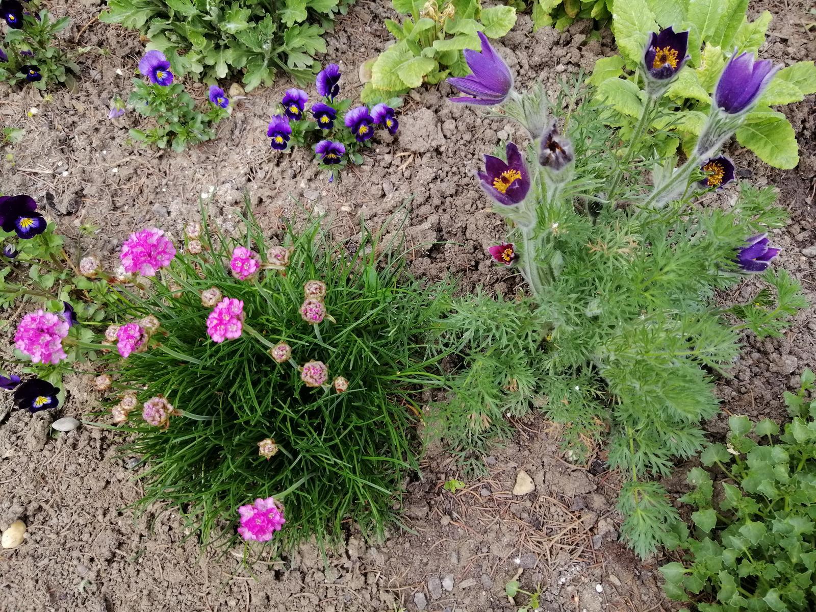 Zahrada 2020 - Obrázok č. 18