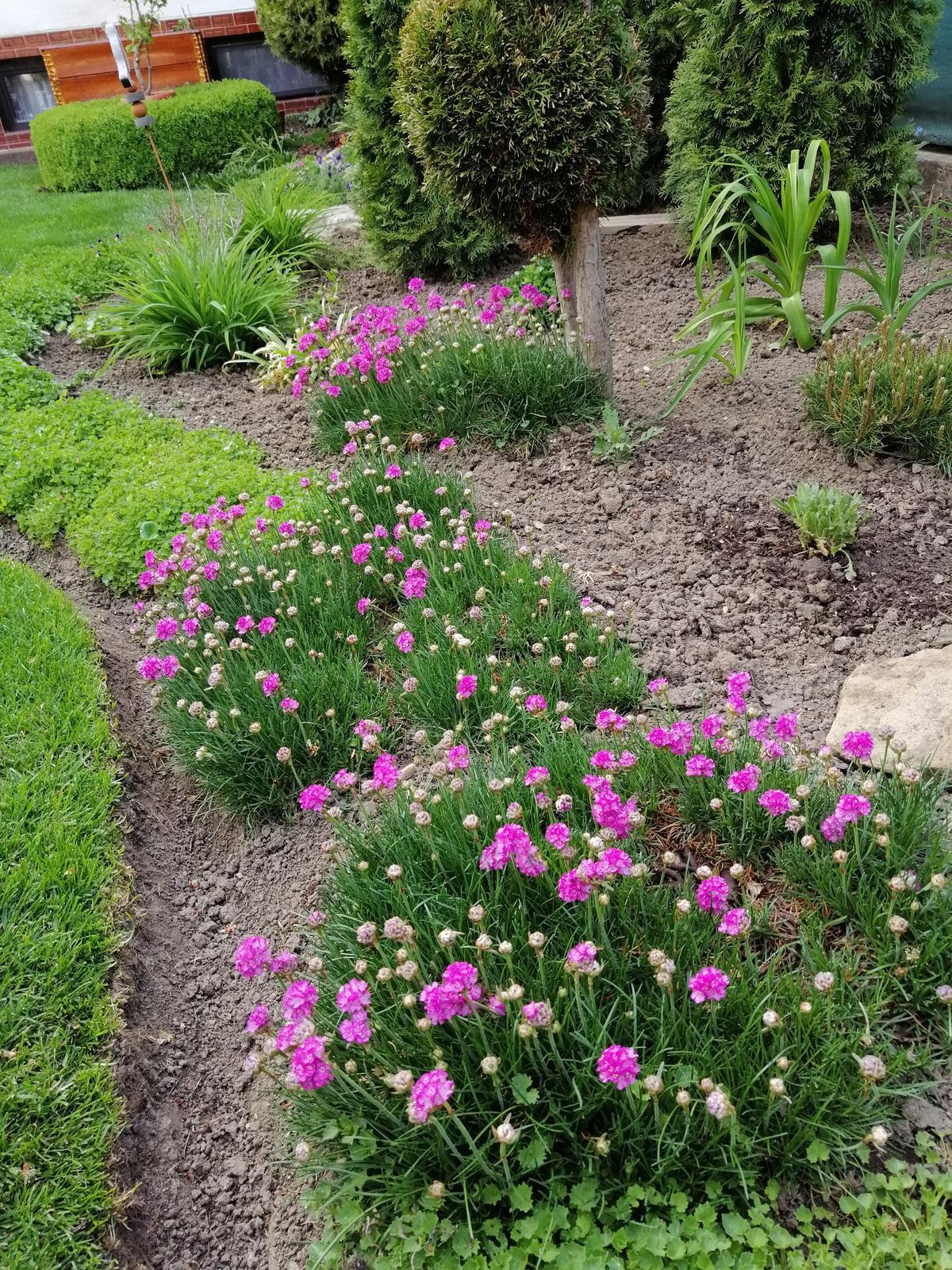 Zahrada 2020 - Obrázok č. 19