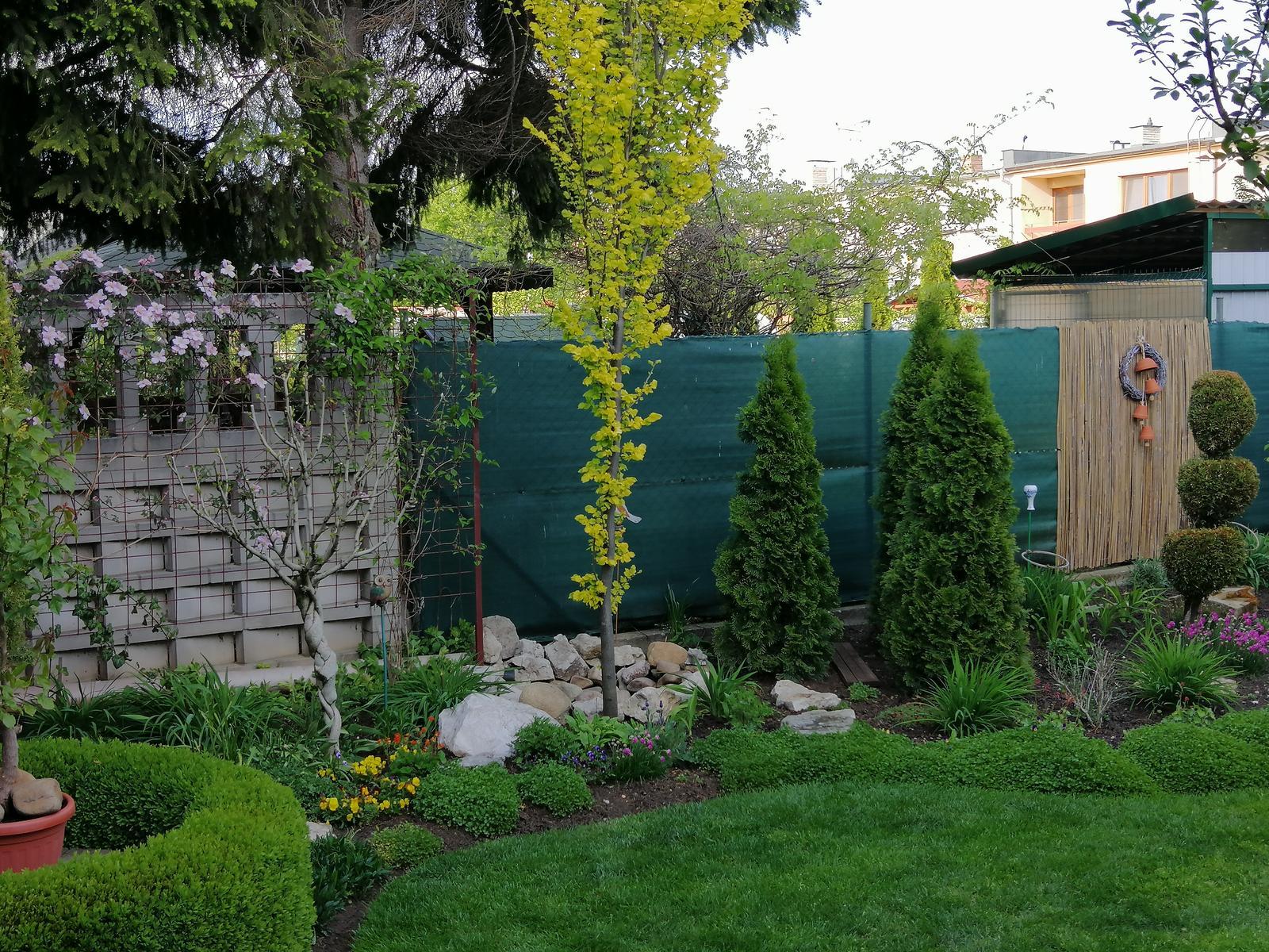 Zahrada 2020 - Obrázok č. 29