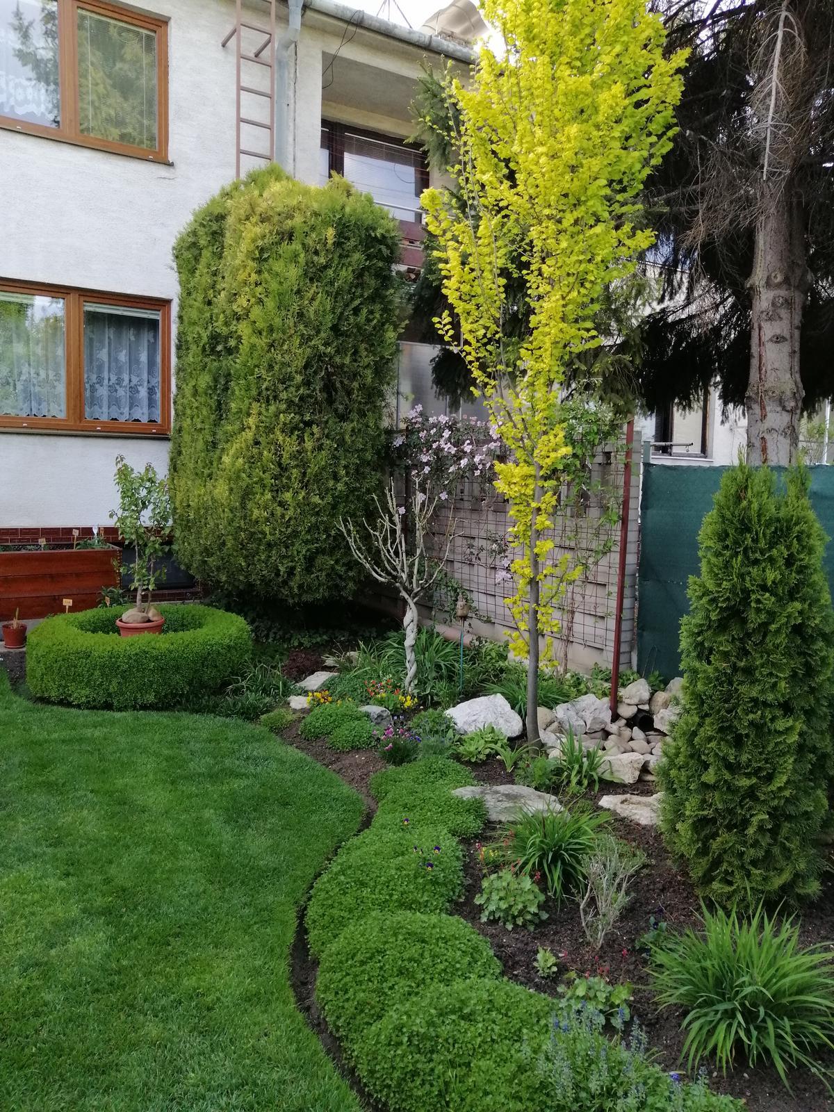 Zahrada 2020 - Obrázok č. 32