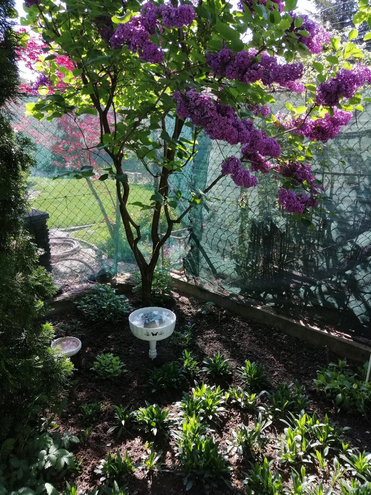 Zahrada 2020 - Obrázok č. 48